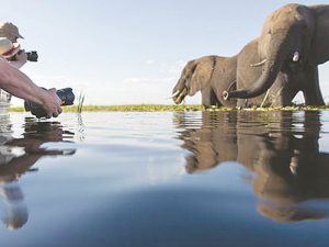 Experience the Okavango Delta by traditional dugout and view the huge Chobe elephant herds by boat.