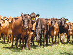 World Wide Sires says demand for overseas genetics is growing.