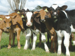 Copper deficiency's link to lameness