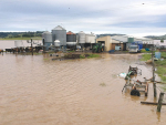 Tropical Cyclone Debbie caused damage to dairy farms in NSW and Queensland.