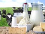 Dairy prices fall