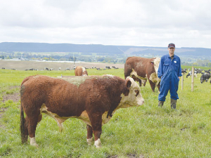 Farm manager Ian Fraser says using all bulls for mating cows is going well.