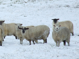 Caring for livestock in wild winter weather