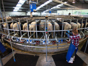 "Farmers interested in milking sheep need to take a ""watching brief"" on the Government's new Primary Growth Partnership programme."