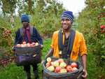 More Pacific workers for NZ orchards