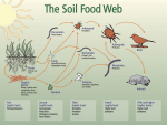 Science snippet: What is the Soil Food Web?