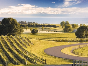 A bountiful Bay, producing some special Sauvignon Blancs. Photo: Sileni Estate, supplied by NZW.