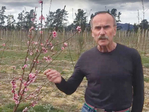 Plant & Food Research Science Group Leader Dr Brent Clothier on the Ngai Tahu Farming trial orchard at Balmoral, near Culverden. Photo: Supplied.