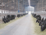 Fonterra China Farms sale almost a done deal