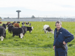 Christchurch Men's Prison farm chief instructor Warren Chilton on the mixed-breed beef herd now being established after the dairy operation was shut down over the threat of Mycoplasma bovis. Photo: Rural News Group.