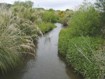 State funding for riparian planting