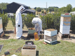 New Varroa heat treatment method causes a buzz
