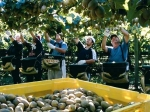 Zespri calls for grads