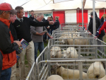 The second annual Beltex sale will be held at Mt Somers on March 1.