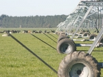 Irrigated dairy farms are bracing for higher N loss figures under the new version of Overseer.