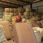 Strong dollar softens wool prices