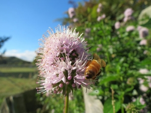 Farmers urged to plant bee-friendly