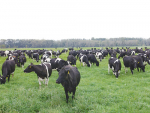 It is estimated that 30% of New Zealand grassland provides insufficient selenium for grazing livestock.