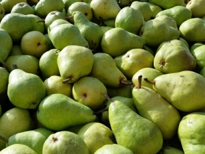 Pipfruit industry on track