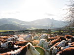 The new programme is said to be the beef industry's response to increasing demand for high quality food produced with a lower environmental footprint.