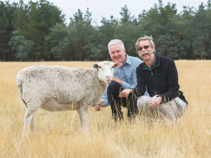 'Sharon' the mutant sheep with scientists: Could she be the answer to wool's current woes?