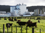 Fonterra lost $605 million in the 2019-20 year.