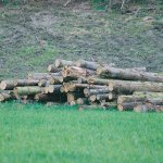 Compulsory log levy proposal from NZFOA