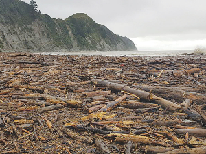 Tolaga Bay was cheek by jowl with logs and slash – unwanted by forestry operators – after the storms in mid July.