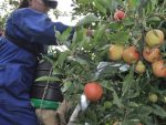 New visa for 11,000 seasonal workers