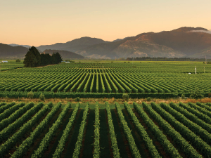 Marlborough may reach near land capacity by around 2025; supply limits may be reached by around 2028, PwC says.