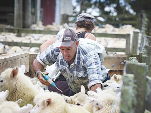 The trial is being held during lamb weaning to see whether it reduces the need for anthelmintics.