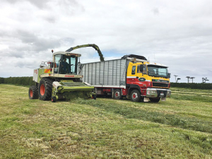 Silage making on a Taranaki farm last week. Photo: Matthew Herbert.