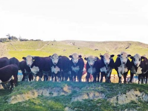 Farmers are being urged to insure bulls and protect themselves from losses.