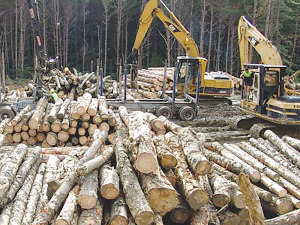 The forest and wood processing sector brings in between $6 and $7 billion per year, employing 35,000 people.