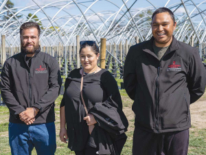 Finalists in the Young Maori Grower, Ahuwhenua Trophy Competition for Horticulture: Maatutaera Akonga, Finnisha Tuhiwai and Brandon Cross. Photo: alphapix.nz