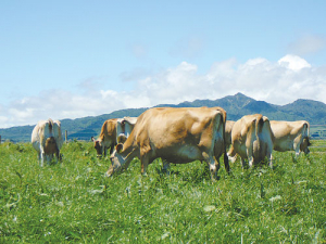 Jersey is the fastest growing breed internationally, says Jersey NZ.