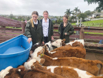 A slice of farming paradise in Auckland City