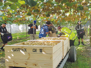 Kiwifruit continues to be New Zealand's largest fresh fruit export, valued at $2.3 billion in 2019.