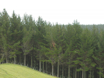 Government projections show exotic forestry increasing by 25 to 30% over the next 15 years.