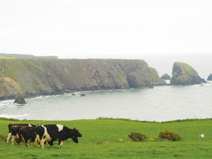 The Irish dairy sector is facing a fodder crisis.