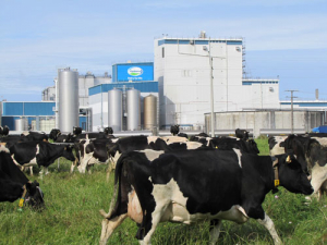 It is 2016 election time for Fonterra.