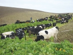 Trial suggests that winter grazing management can reduce nutrient losses to waterways.