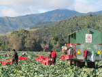 Urban sprawl is seen as a huge challenge to the vegetable growing sector in NZ.