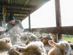 An ode to the 'beloved' sheep yards