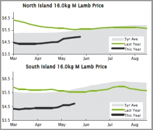 LAMB | North Island lamb prices to crack $5/kg