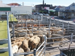 In the past 12 months at least 107,000 weaners have been sold at PGG Wrightson weaner fairs.