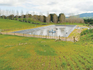 Dairy effluent is a great source of nutrients for growing pasture.