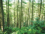 MPI estimates 20% of NZ will be infested with unwanted wilding conifers in 20 years if their spread is not contained.