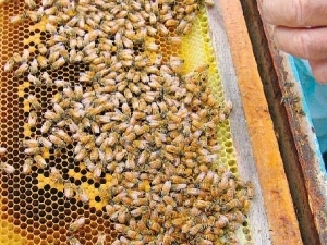An industry survey shows that register beehives in New Zealand have doubled in the last 10 years.
