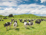 Dairy awards attract 366 entries